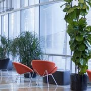 plants office Shine Facility Services